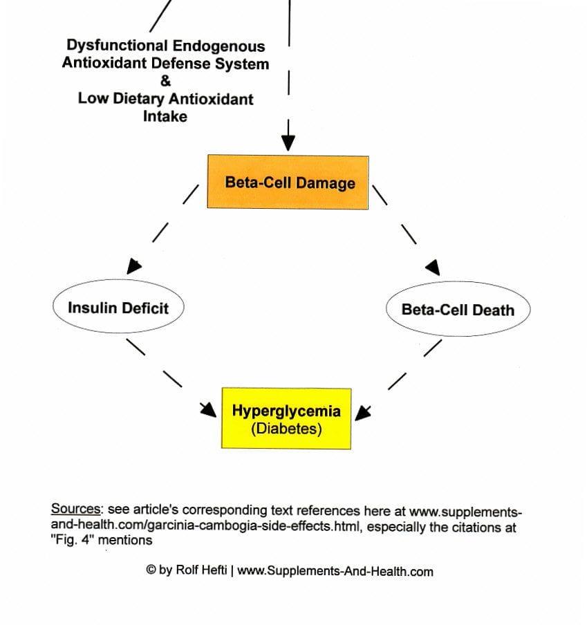 Figure 4b: Cholesterol Lowering Garcinia Extract-Diabetes Path