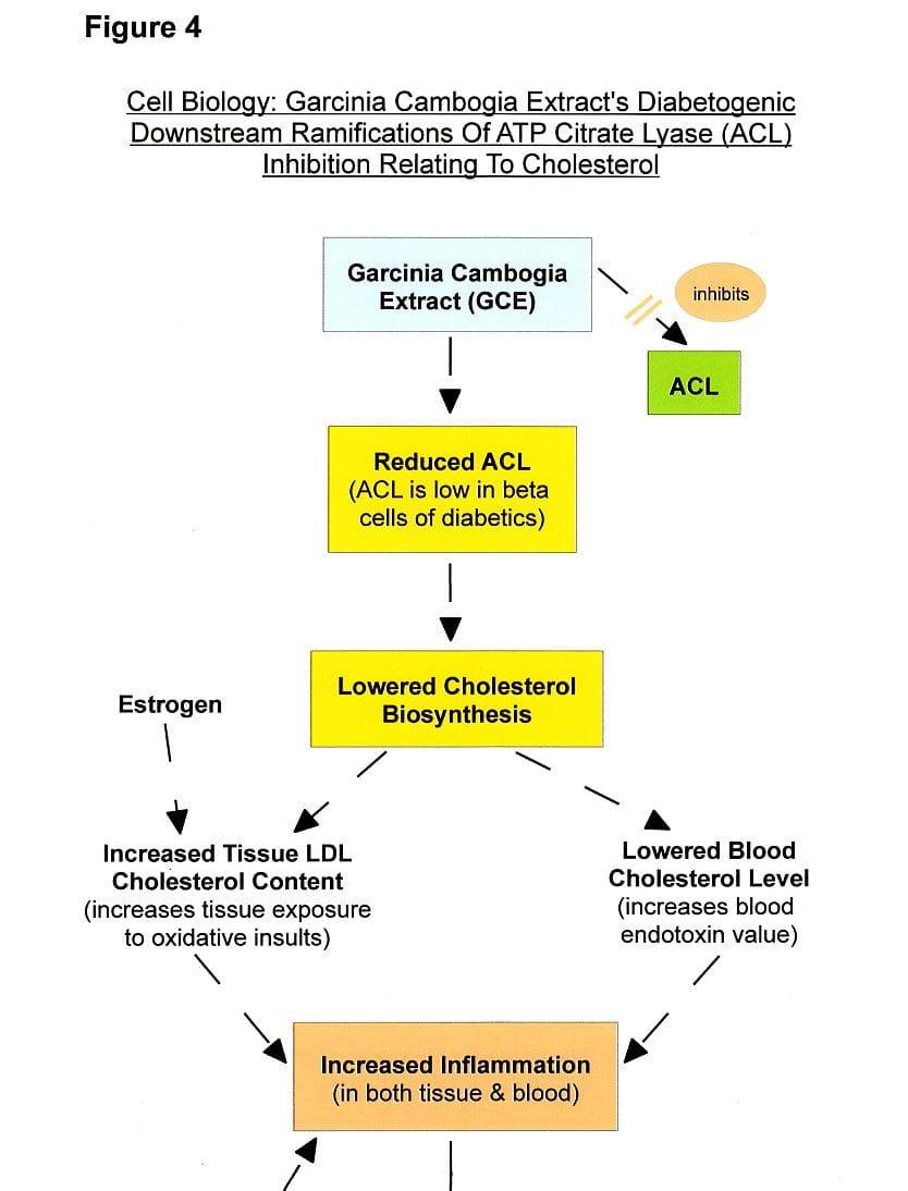 Figure 4a: Cholesterol Lowering Garcinia Extract-Diabetes Path