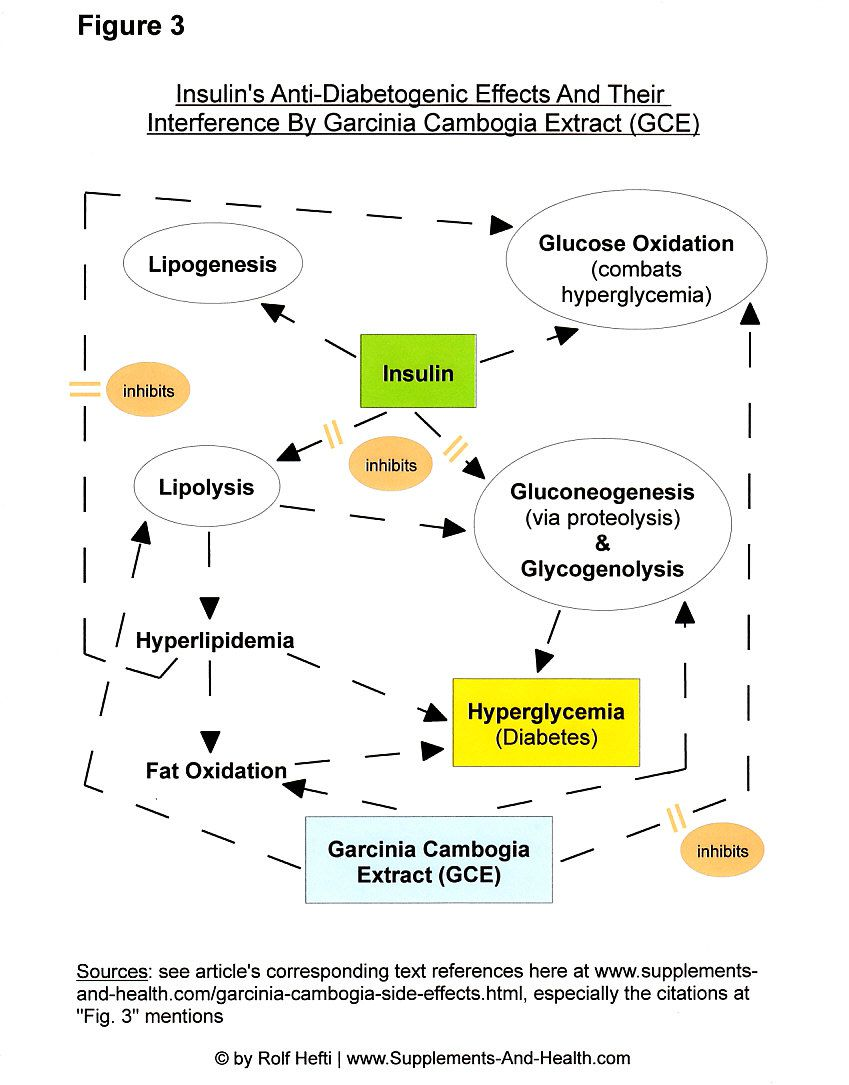 Figure 3: Cambogia Garcinia Extract Opposes Treatment For Diabetes