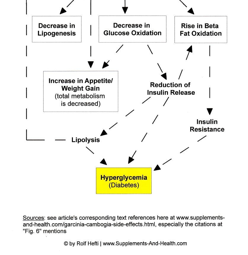 Figure 6b: Garcinia Side Effects - Boosting Diabetes Via Malonyl-CoA Interference