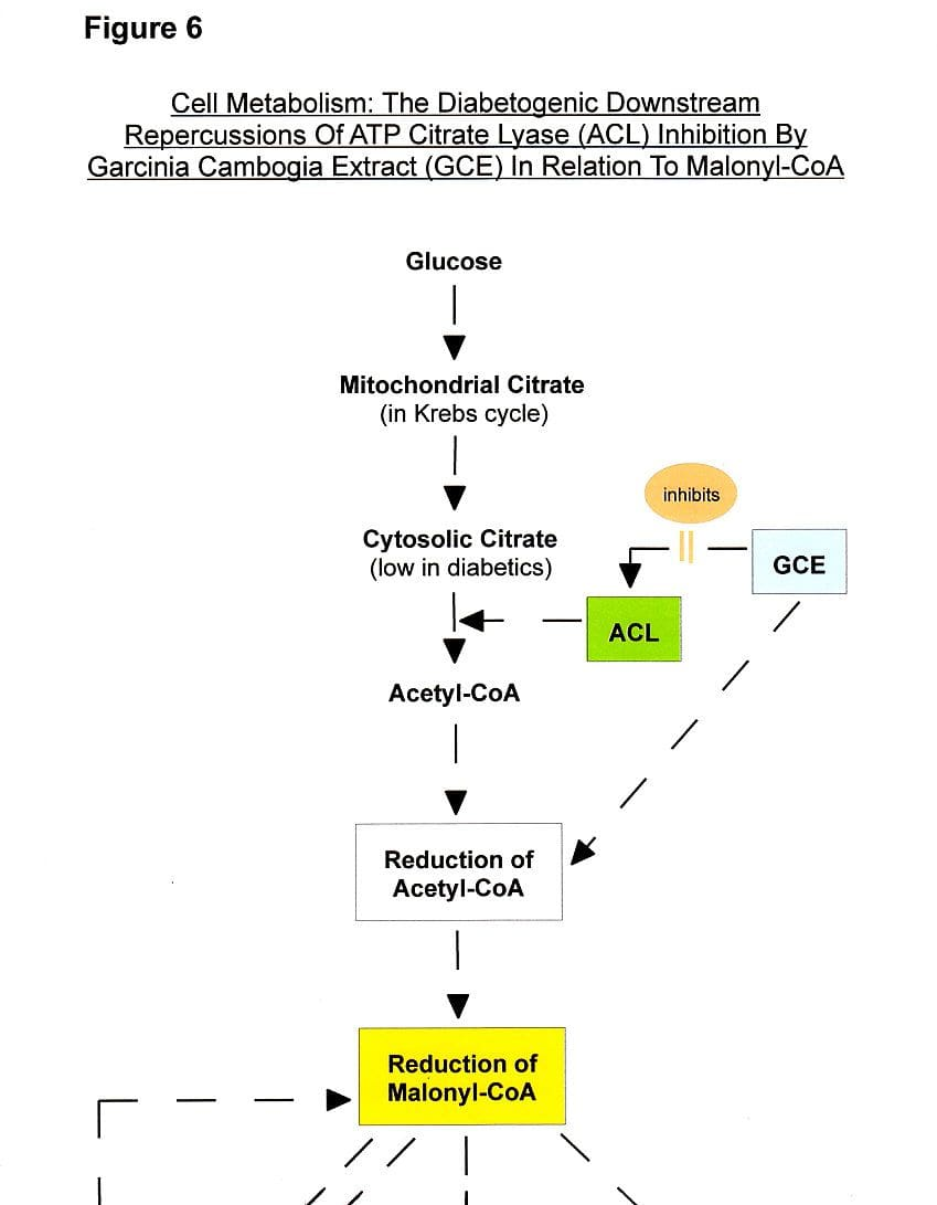 Figure 6a: Garcinia Side Effects - Boosting Diabetes Via Malonyl-CoA Interference