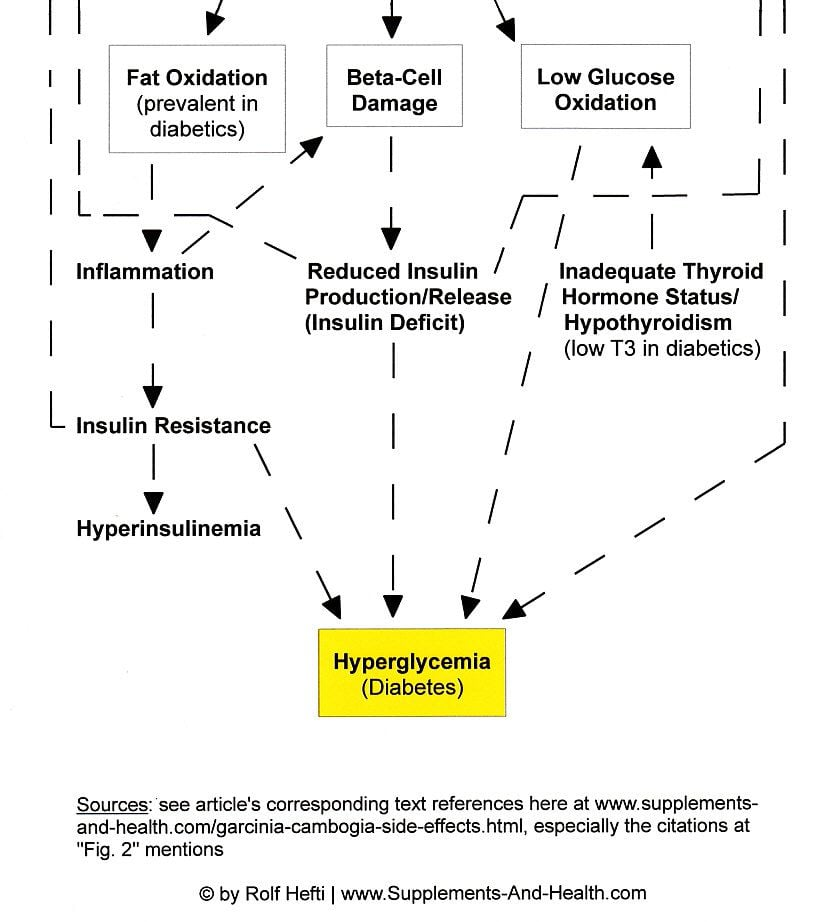 Figure 2b: Negative Effects Of Garcinia Cambogia Extract - Raised Diabetes Risk
